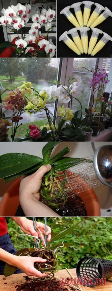 ¡Este medio — el hallazgo presente para todos los aficionados de las orquídeas! El florecimiento extraordinariamente pomposo …