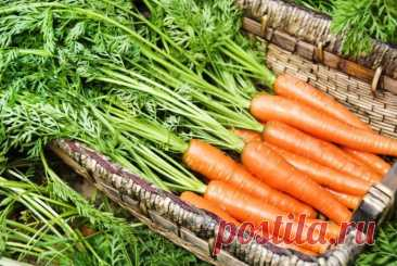 Морковь: виды посадок, когда и как сажать, сроки, посадка и уход, сбор урожая, хранение, уборка, подробная инструкция для начинающих, фото с описанием