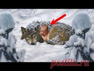 Спасая вмерзшего в лед волка, парень обомлел, ведь под ним лежал новорожденный...