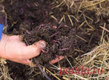 Зачем мульчировать огород горячей травой | Почва и плодородие (Огород.ru)
