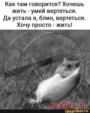Как там говорится? Хочешь жить - умей вертеться. Да устала я, блин, вертеться. Хочу просто - жить! - ) / АйДаПрикол .)