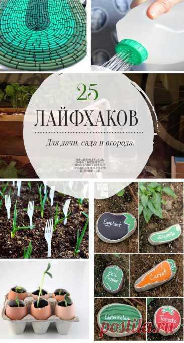 25 лайфхаков для дачи, сада и огорода | tobehome.ru