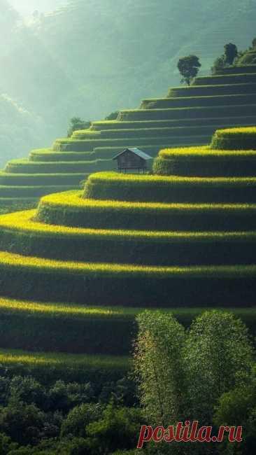 Рисовые поля Му Кан Чай, Вьетнам Эти терассы - рукотворные. Их вырубили в горах много веков назад, для того чтобы обеспечить водой рисовые поля. Они считаются одним из самых красивых мест…