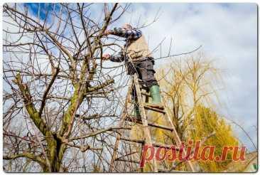 Обрезка деревьев для начинающих - виды и сроки | На даче | Яндекс Дзен
