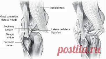 Как боль в коленях связана с мышцами живота: рассказываем необычную причину проблем с суставами   This is Бокс   Яндекс Дзен