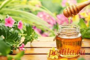 Как выбрать качественный мёд. Осторожно, мошенники! » Женский Мир