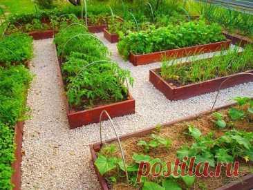 Огород по-новому на маленьком участке