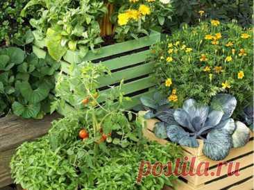 9 способов, как создать огород даже на маленьком клочке земли