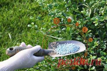 Селитра, зола или мочевина? Чем и когда надо удобрять летом растения | Огород | Дача | Аргументы и Факты