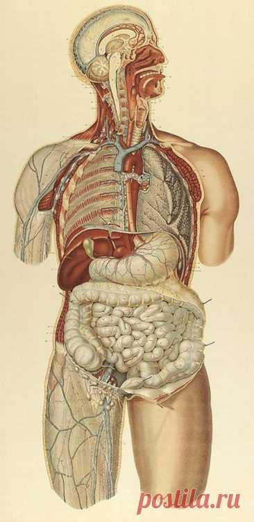 Формула здорового питания доктора Бубновского Пища, попадая в организм человека и изменяясь в нем, олицетворяет собой жизненный процесс во всем его объеме — от элементарнейших физических свойств организма вплоть до высочайших проявлений человеческой натуры.