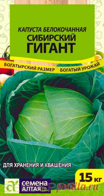 Капуста белокочанная Сибирский Гигант, 0,5 г, купить в интернет магазине Seedspost.ru