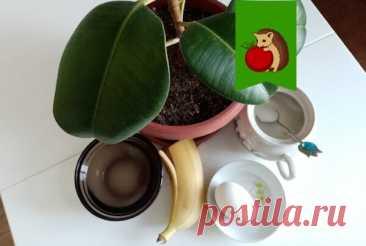 Что добавить воду, протирая листья комнатных растений для блеска и здоровья: рецепты моих читателей и мое мнение | садоёж | Яндекс Дзен