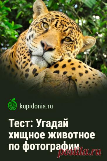 Тест: Угадай хищное животное по фотографии. Продолжаем серию тестов «Угадай по фотографии» и сегодня предлагаем вам узнать хищное животное по фото и небольшой подсказке. Проверьте ваши знания и визуальную память!