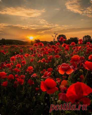 ༺🌸༻И пусть в каждом Закате будет Вера в Мирное Завтра без Войны... ....................................................