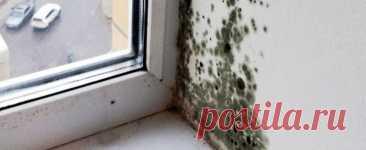 Плесень, грибок: как бороться с проблемой - OKWOOD Одним из самых печальных событий, с которым может столкнуться жильцы – это обнаружить на когда-то светлой поверхности древесины или просто на стене, пятна и ощутить неприятный...