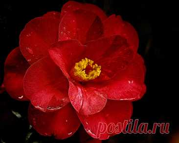 Цветы на темном фоне
