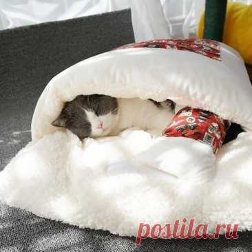 😍It's cold, give our cats and dogs a small bed, which is convenient to carry and keep warm.💖🧐