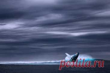 Удивительные и интересные факты про синих китов