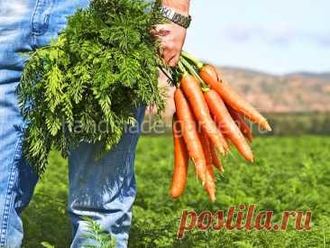 Как посеять морковь: топ-7 методов