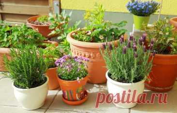 Как выбирать комнатные растения, которые долго будут украшать дом   Мой ❤ цветник   Яндекс Дзен
