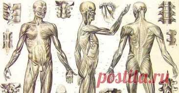 Признаки того, что со здоровьем что-то не так - Народная медицина - медиаплатформа МирТесен Наше тело посылает нам определенные сигналы, которые позволяют вовремя узнать о развитии того или иного заболевания и принять соответствующие меры. Уже с древних времен медицина училась распознавать внешние изменения человеческого тела, чтобы определить развитие какого-либо внутреннего