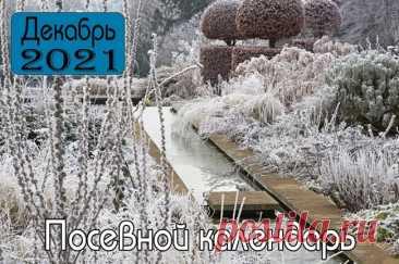 Лунный календарь садоводов и огородников на декабрь 2021 года-Благоприятные посадочные дни