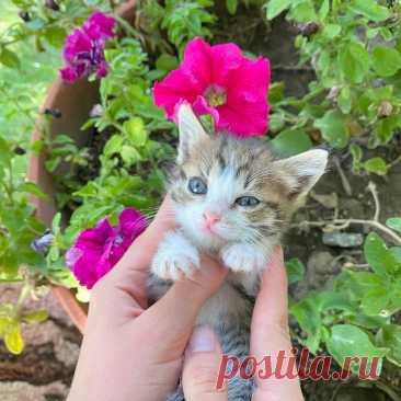 ‼️БЕСПЛАТНО ОТДАДИМ КОТЯТ‼️ ✨Полюбуйтесь на эту маленькую и изящную красотку! Ее зовут Ева, она очень любознательна - от ее внимания не укроется ни одна мелочь в саду. Она серого окраса с прелестными белыми пятнышками на грудке, лапках и мордочке, что делает ее очень милой!  Будущий хозяин обретёт в ее лице доброго и преданного друга!✨  #котятабесплатноалматы #котятабесплатно #котятадаром #кошкиалматы #котятаалматы #купитькотенка #котятавдаралматы #котятавдобрыеруки #котятанапродажу