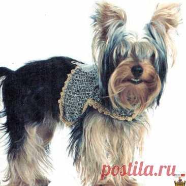 Вязаная одежда крючком – топ для маленьких собак