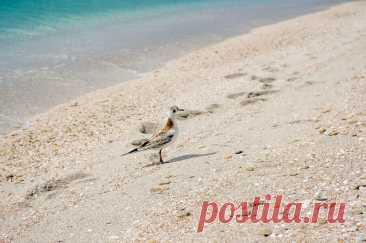 Когда откроются пляжи Крыма в 2021 году? Информация для туристов - Александр, 01 марта 2021