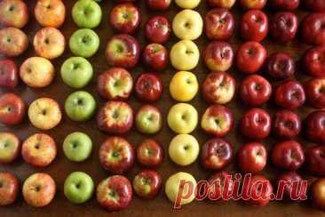 Цвет яблок влияет на их полезные свойства Всем давно известно, что одно яблоко в день чудесным образом сберегает наше здоровье. Но вот тот факт, что от цвета яблок зависит для кого они более полезны, ученые выяснили не так давно.Разные по цвету яблоки обладают разным вкусом, у них разный состав полезных веществ и свойств. Зеленые...