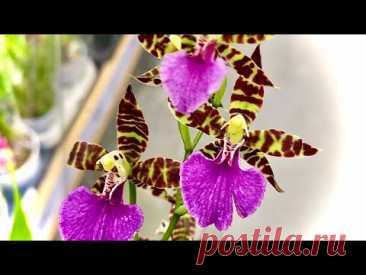 новый ЗАВОЗ ОРХИДЕЙ и ПОЛЕЗНОСТИ для орхидеи ОБЗОР