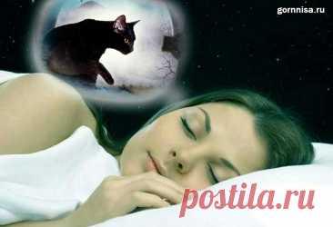 Чёрная кошка во сне - что сон несёт в реальную жизнь | ГОРНИЦА Чёрная кошка во сне - что сон несёт в реальную жизнь. Традиционно считают черную кошку символом угрозы и предвестником неудач. Однако, если
