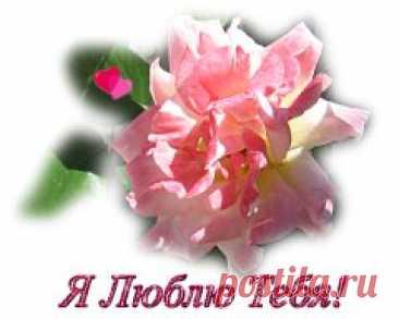 Розовые Розы - поздравительные открытки любви