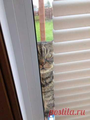 А из нашего окна... от Никифоридис за 22 января 2021 на Fishki.net