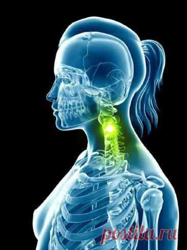 5 упражнений для шеи: Нормализуют давление и освобождают от зажимов - Уголок хозяйки - медиаплатформа МирТесен