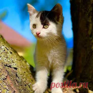 Photo by Котята даром Алматы on September 13, 2021. May be an image of cat, outdoors and tree.