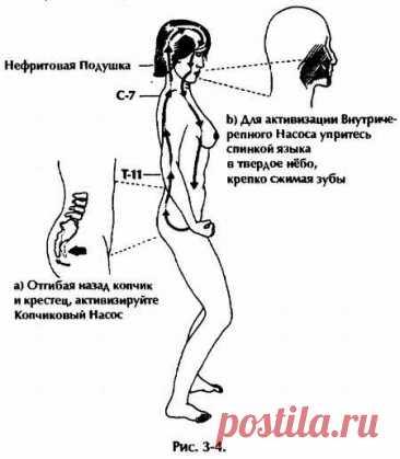Нейгун - искусство омоложения организма (fb2)   Флибуста