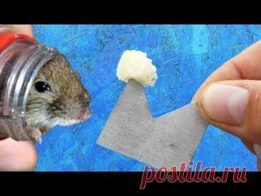 Простая мышеловка за 30 секунд / Крысиная ловушка