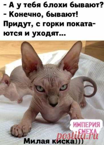 Очень красивая... ОСЕНЬ.. - Природа - 1849154 - Tabor.ru