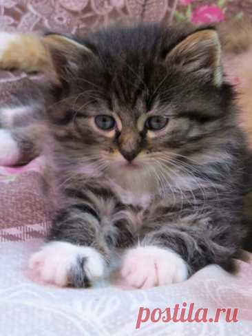 Кот, который хотел вернуться - Друг - медиаплатформа МирТесен Пока он был маленький, мы звали этого полосатого шпротика Нафаня. Очень хотелось оставить себе такую милоту. Он, видимо, это знал и сделал все, чтобы вернуться. В тот день Нафаня получил имя Шаман. Была у меня когда-то кошка, которая гуляла сама по себе. Красавица и умница. Три раза Бебешка