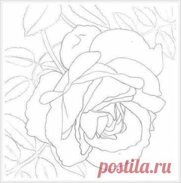 Рисуем чайную розу