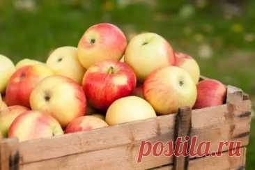 5 секретов длительного хранения яблок - Квартира, дом, дача - медиаплатформа МирТесен