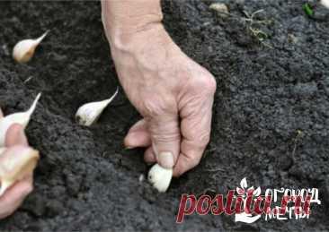 Секрет самого раннего урожая на даче очень простой - подзимний посев! 12 растений, которые можно сеять под зиму на огороде   Огород Мечты   Яндекс Дзен