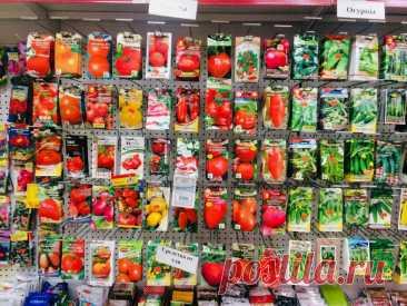 Почему я покупаю семена летом | Садовичок | Яндекс Дзен