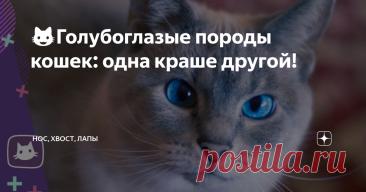 😺Голубоглазые породы кошек: одна краше другой! Необычно, когда кошка смотрит на тебя небесно-голубыми глазами. Яркие, как льдинки, они словно видят насквозь.  Мимо кошки-голубоглазки трудно пройти, не обратив внимания. Примечательно, что котята рождаются с голубыми или синими глазками, но потом их организм вырабатывает особый пигмент меланин, окрашивающий радужку янтарным или зеленым цветом.  Когда меланина не хватает, то глаза так и остаются голубыми. Есть породы кошек, ...