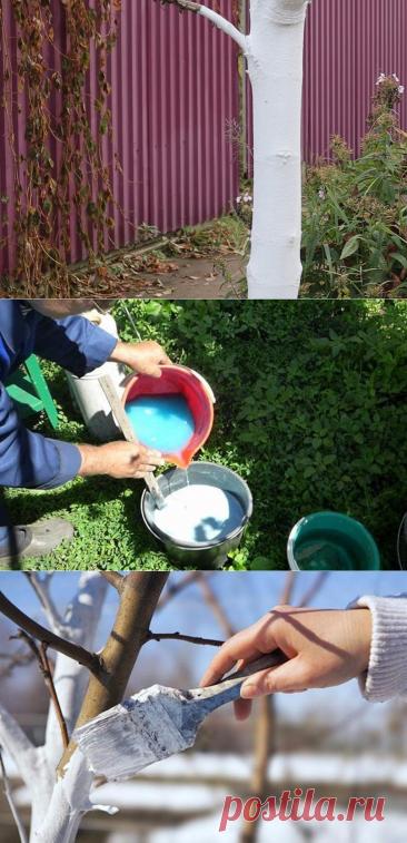 Готовим раствор для осенней побелки деревьев. Правильно разведенный получится светло-голубого цвета и по консистенции напоминает сметану