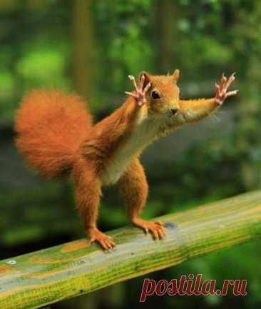 Веселые картинки из жизни животных