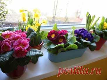 Постоянно подкармливаю комнатные цветы Активированным углем - результат превосходит ожидания.