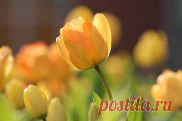Tochka Zрения ⁄ Международный женский день 8 марта 00:06, Москва, Сегодня в России и во всём мире отмечается столь любимый всеми нами праздник 8 марта — Международный женский день. По традиции, в нашей стране этот день имеет статус государственного…