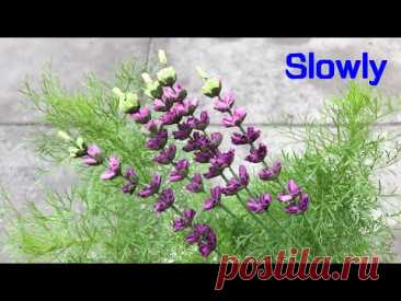 ABC TV | How To Make Lavender Paper Flower | Flower Die Cuts (Slowly) - Craft Tutorial